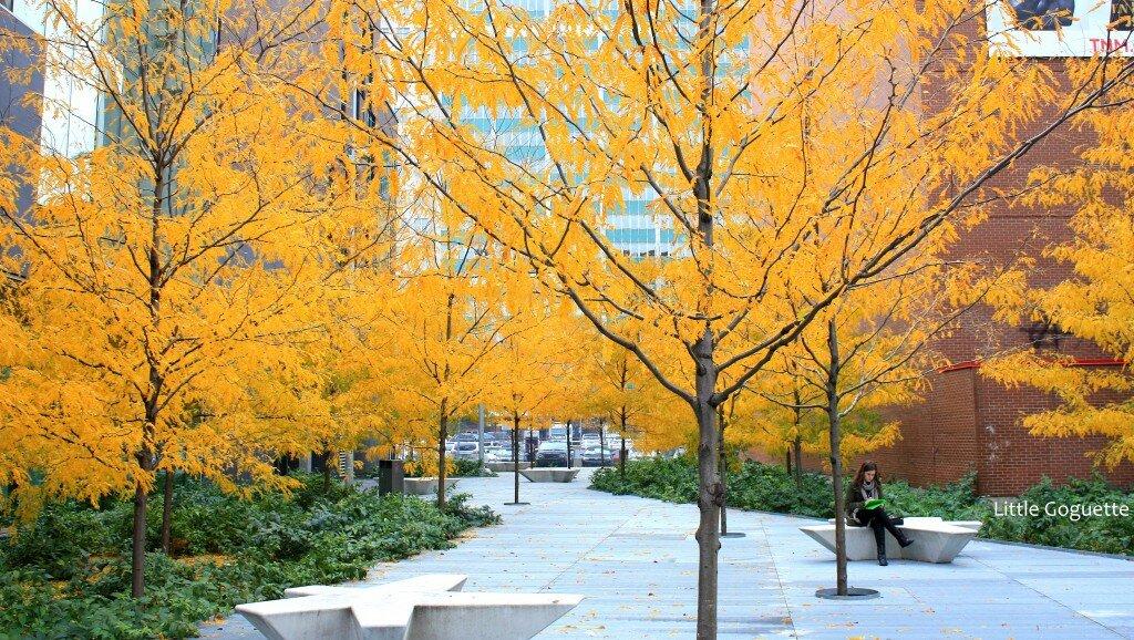 L'automne flamboyant de Montréal