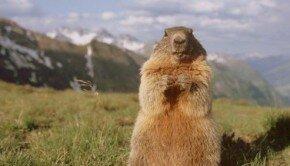 La Marmotte de Verbier !