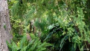 Little Goguette à Ténériffe - le Jardin Botanique